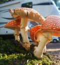mushrooms at Mounthaven